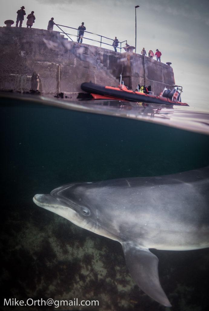 dusty the dolphin split shot